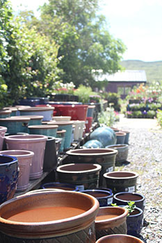 Large display of pots